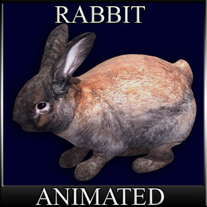 3d bunny der hase