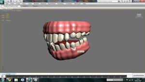 3d model of human teeth