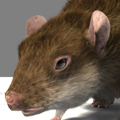 3d talking rat