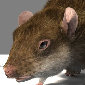 3d talking rat