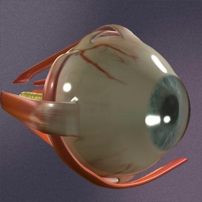 realistic eye 3d max