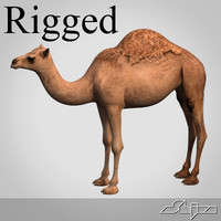 Camel Rigged