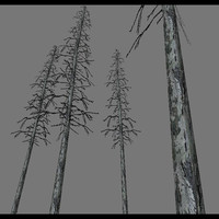 Dead Forest Tree Tall.rar