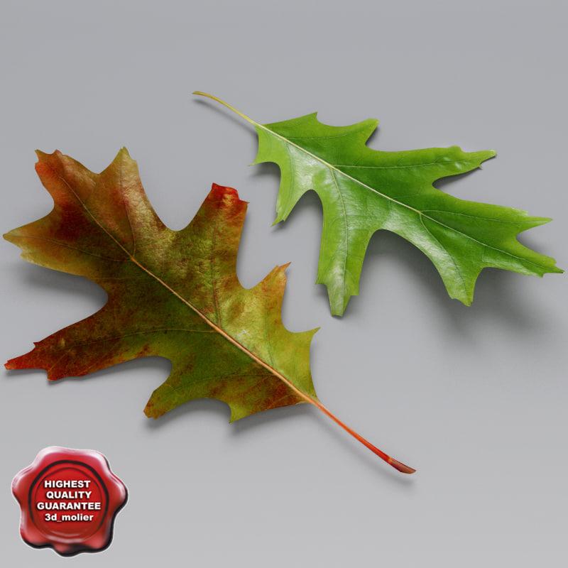 oak leaves summer autumn 3d c4d