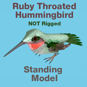3d model ruby throated hummingbird standing