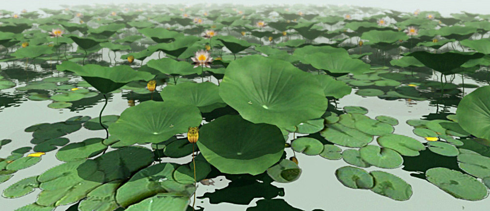 flower hydrophytic vegetation 3d max
