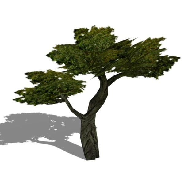3d model bonsai tree