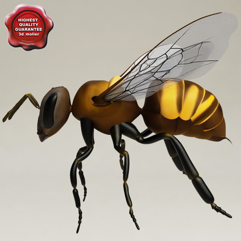 3d model wasp modelled