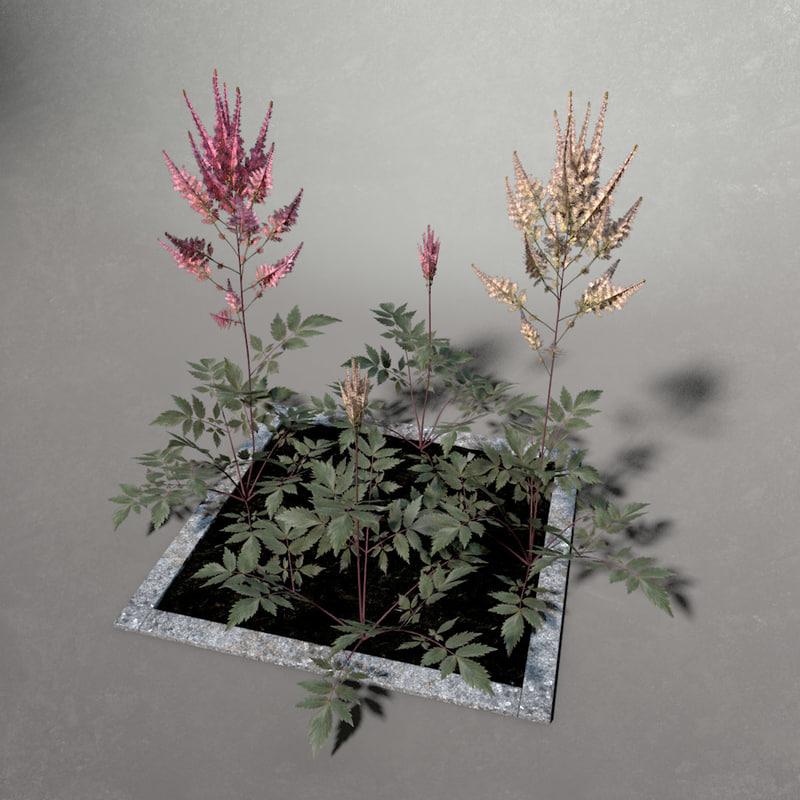 3d flower springtime astilbe