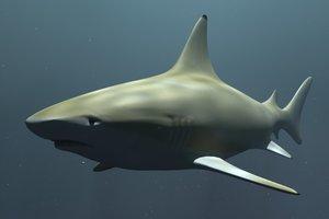 free lwo model black tip reef shark