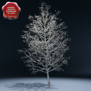winter tree v3 3d lwo