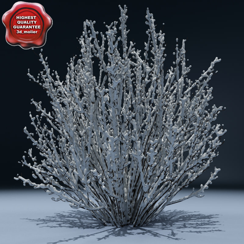3d model winter tree v7