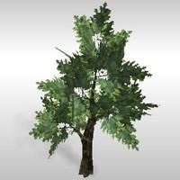 Oak tree # 1
