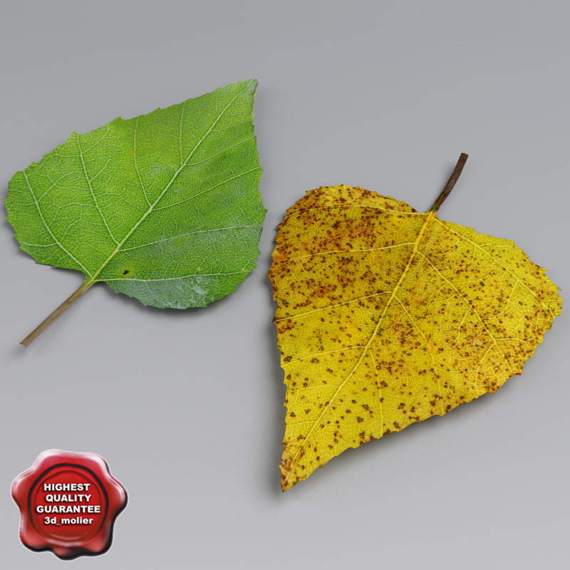 3dsmax birch leaves summer autumn