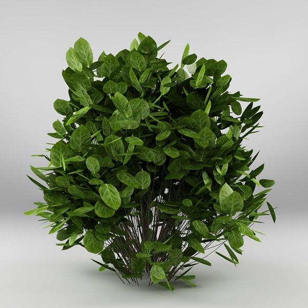 bush max