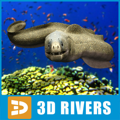 moray eel sea max