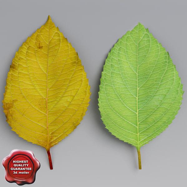 cherry leaves summer autumn 3d 3ds