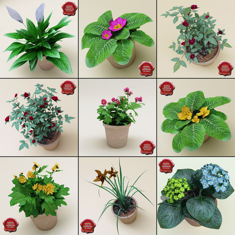 interior plants v3 3ds