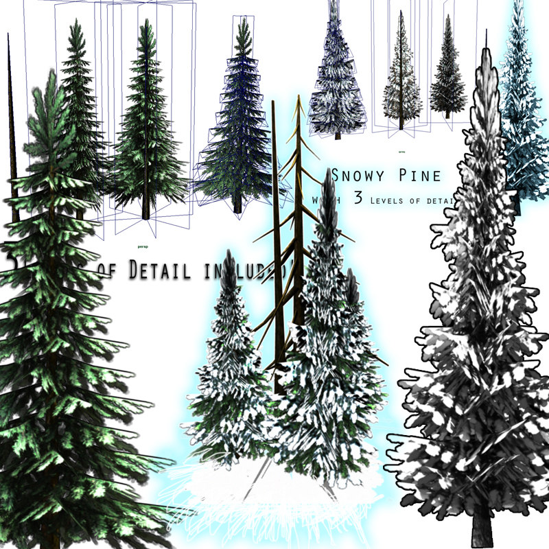 pack pine tree snow ma