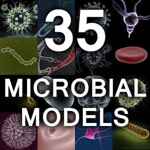 micro microbiology bacteria cell 3d model