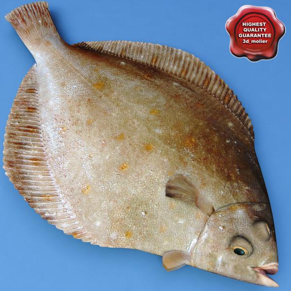 3d flatfish modelled model