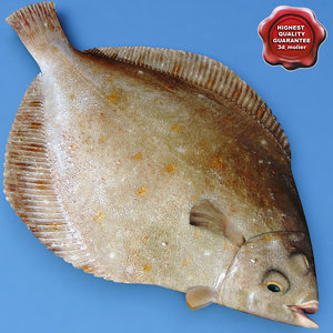 3d flatfish modelled model