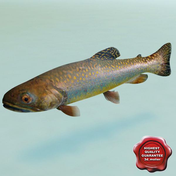 trout modelled 3d model