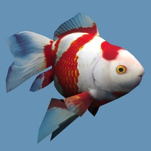 goldfish fish gold 3d model
