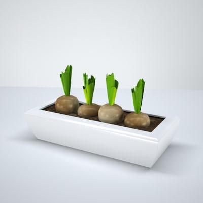 maya onionplant plant onion