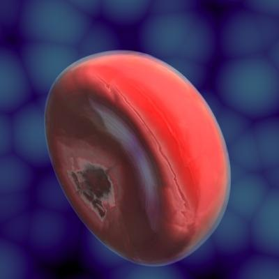 free blood cell 3d model