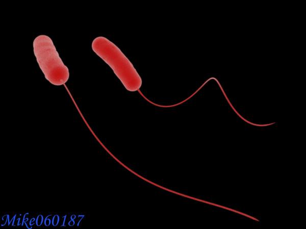 legionella bacteria max