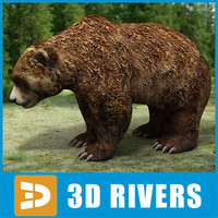 Brown Bear by 3DRivers