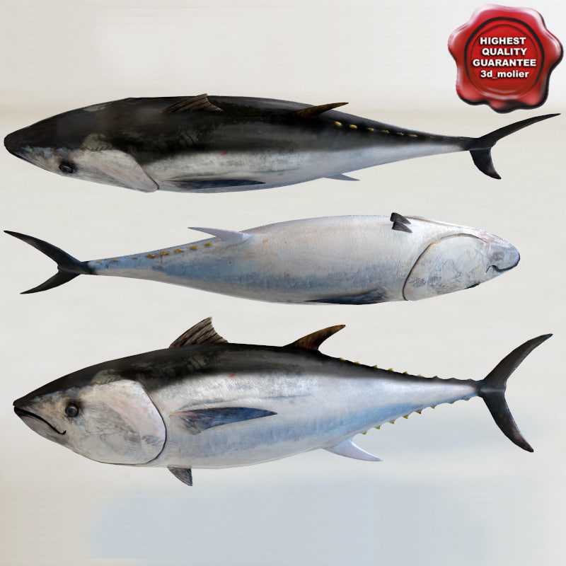 tuna modelled 3d model