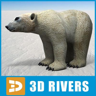 maya polar bear