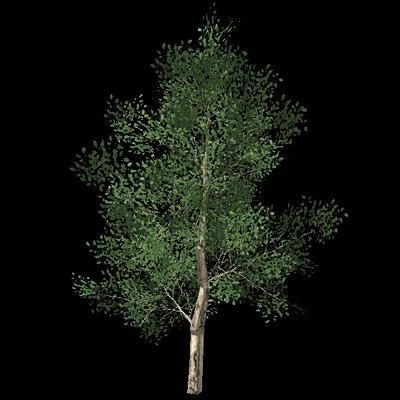 3ds oak tree