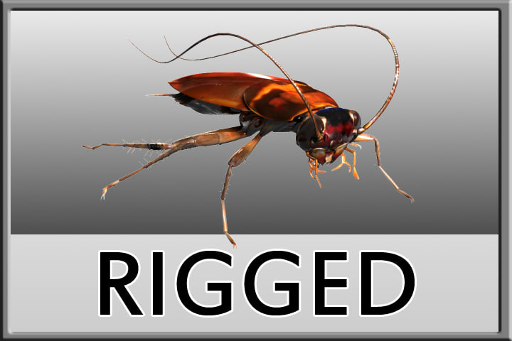 cockroach rigged 3d max