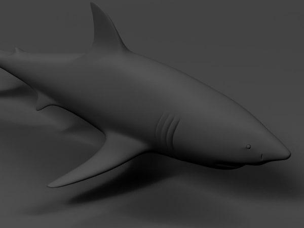 free shark 3d model