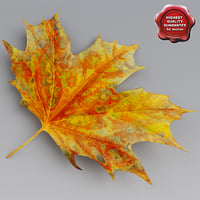 3d maple leaves autumn
