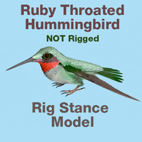 Ruby Throated Hummingbird RigStance