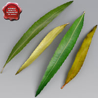 3d willow leaves summer autumn model