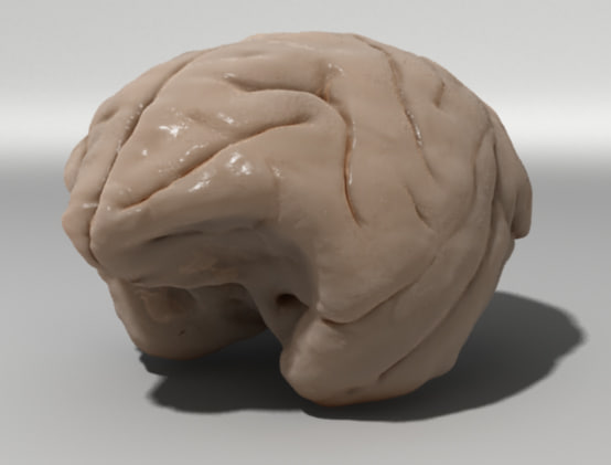 monkey brain 3d obj