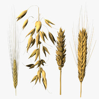 oats berley rye max