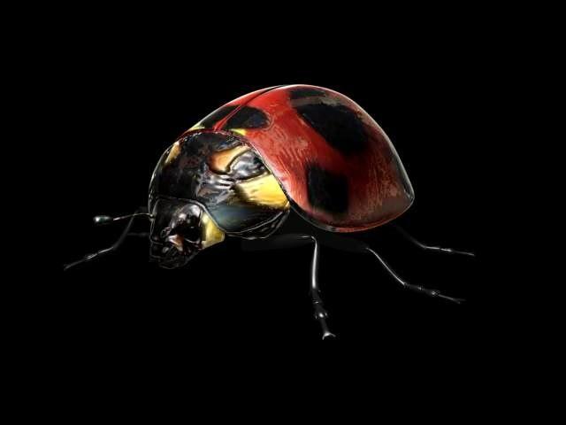 ladybug bug 3d model