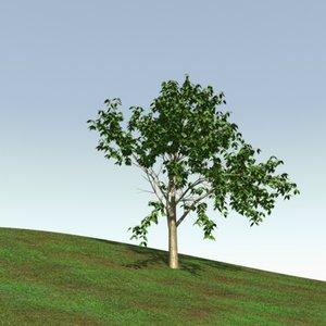 lightwave birch tree