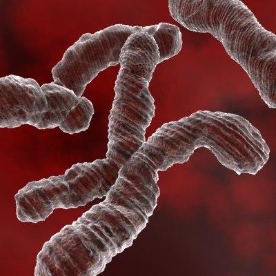chromosomes human medical 3d model