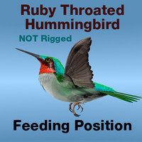 Ruby Throated Hummingbird, Feeding Position.