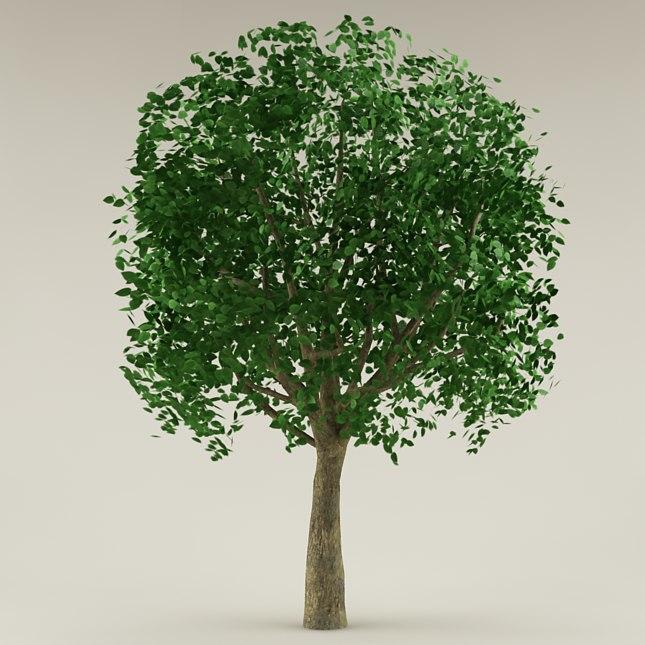 3ds max tree garden