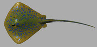 StingRay Model:: Custom Rigged:: Hi-res Textures with Bonus Alternate Texture Set