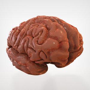 3ds max human brain external