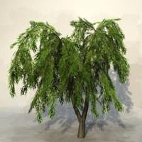 Tree_055.zip